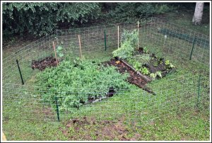 Fenced backyard garden to protect from deer and dog.