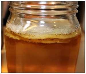 Second Jun scoby formed on top of original