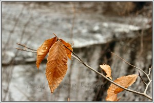 Lingering fall leaves