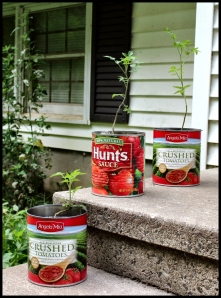 Canned tomatoes: had leftover tomato plants.  Did not grow many tomatoes; containers were too small.  Be creative!