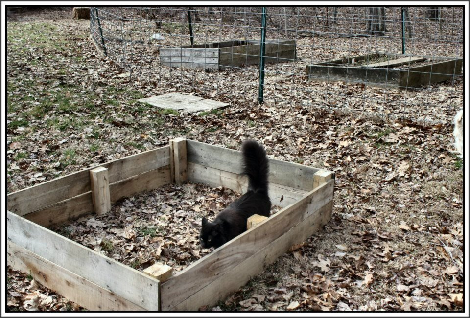 Slow and Steady . . . gardening | Serendipity: Life is a ...