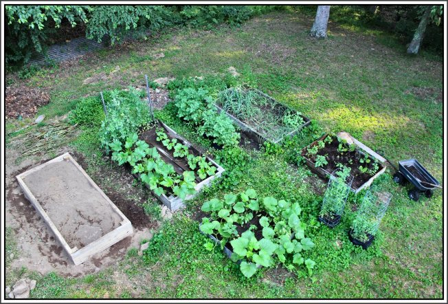 New raised bed on left with, what else, a huge rock of undetermined size and depth.