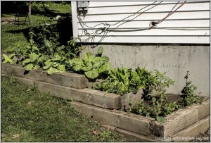 Terraced bed -- permaculture