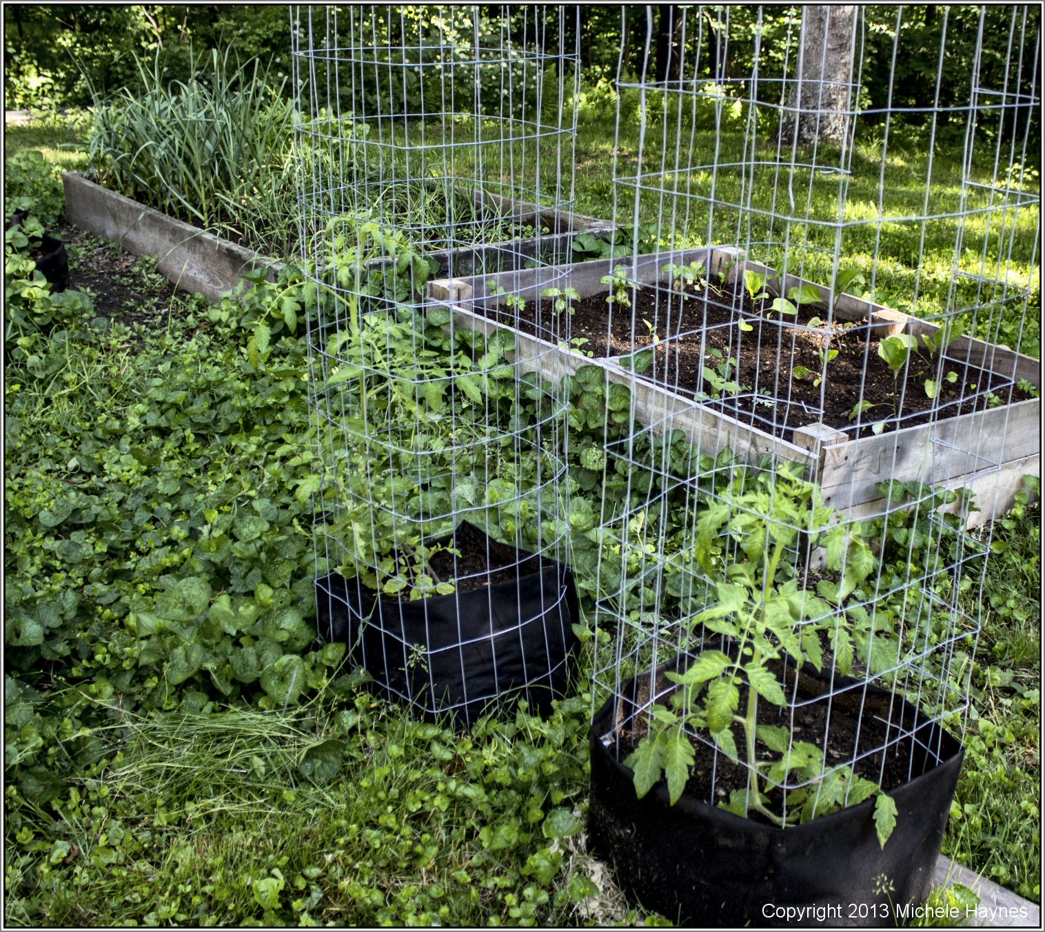 How to plant tomatoes in a garden - Grow Bags In Back Yard Garden Had Less Drying Out But They Were In The
