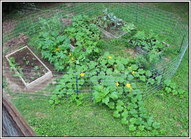 Back yard garden area looking tropical