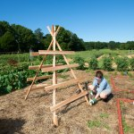 Squash trellis would work with any kind of vining plant especially if placed in two parallel raised beds