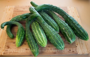 There were plenty ready for harvest in a variety of sizes. There were still several outside -- my hands were full. I have been eating cucumber all day long. Yummy!